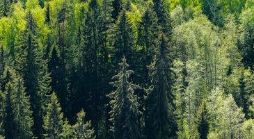 eestis-metsamaa-müük