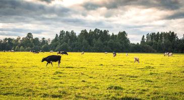 põllumaa-ja-metsamaa-ost-üle-eesti