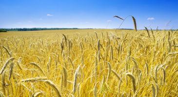 põllumaa-müük-eestis