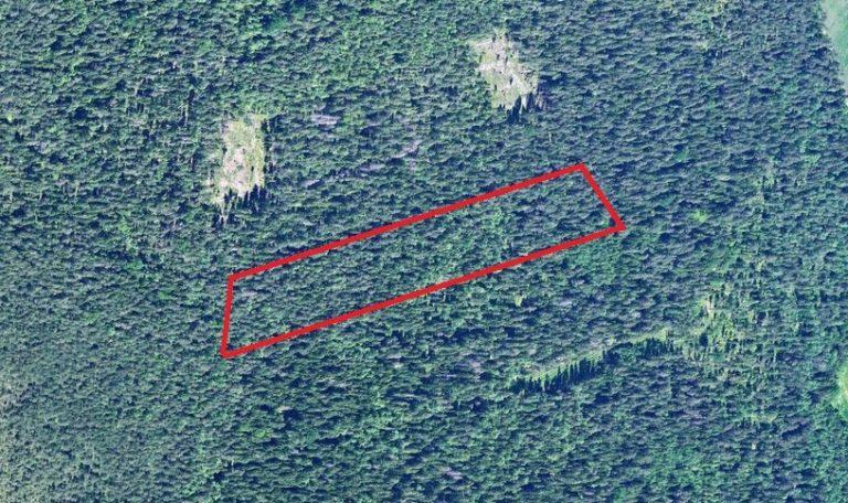 Metsamaa Lahemaa Rahvuspargis
